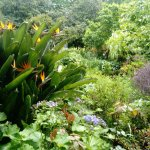 Photo de Palheiro Gardens