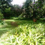 Foto de Palheiro Gardens