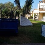 Mattress leaning up against palm tree for 5 days