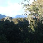 view from Snowgum deck