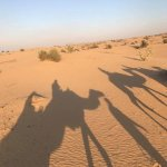 Photo of Desert Safari Dubai