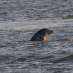 Dolphinn!!