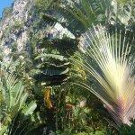 Photo of Vipa Tropical Resort
