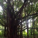 Photo de Pipiwai Trail