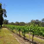Stringybark Cottage Winery & Restaurant