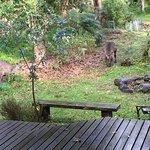 Gorgeous view of kangaroos from the verandah