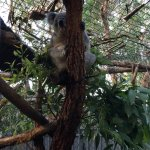 Photo of Koala Hospital