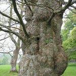 Face in tree taken in 2004.