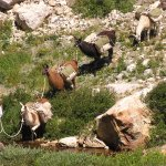 Llama Pack Trip