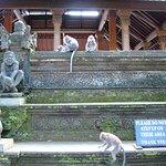 Sacred Monkey Forest Sanctuary