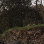 A deer on site :)