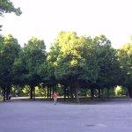 Nice Green Area
