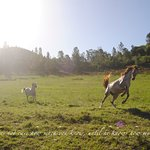 Horses at Ibalansi enjoy over 70 hectares of free roaming