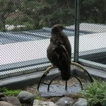 Hawk (don't remember which kind...)