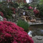 The Japanese garden at Hillwood