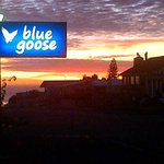 Foto de Blue Goose