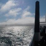 Blue & Gold Fleet, Pier 39 - San Francisco, CA