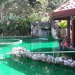 Photo of Paradise Hot Springs