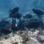 Amazing dive with Sail Fish Scuba!