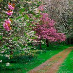 'Spring Garden' in the grounds full of blossom on our visit in April not accessible by my partne