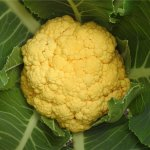 in the garden - cauliflower
