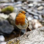 Lots of birds to see and this little chap caem within arms length