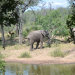 Serondella Game Lodge Photo
