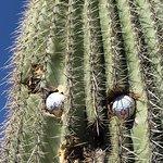 Foto de Starr Pass Golf Club