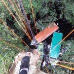 Photo of Amazon Tree Climbing