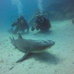 Photo of Macarron Scuba Diver