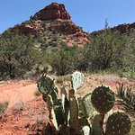 Cactuses and mountains