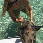 pig climbing on boat