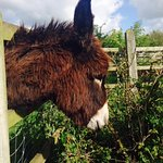 One of Sean's lovely donkeys (who liked the taste of my coat!)