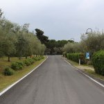 Camping Boschetto Di Piemma Foto