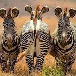 kenya national parks game drives