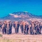 elephants family in amboseli national park in kenya