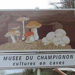 Musée du champignon