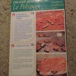 Le polypore, magnifique !