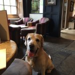 Our Lab loves this pub...he is always made welcome which is lovely