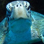 My friend the Hawksbill Turtle, scratching his carapace.