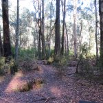 Foto de Stringybark Creek