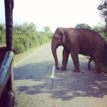 Elephant crossing the road