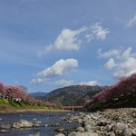 Photo of Kawazu Zakura (Kawazucho)