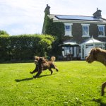 Dowfold House Bed and Breakfast welcomes dogs - they bring such lovely people with them.