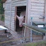 Rosalie à la ferme