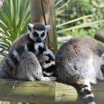 Photo de Battersea Park Children's Zoo