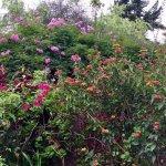 Foto de Hospedaje Los Jardines