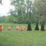 Bee hives on the grounds
