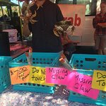 Foto de Mountain View Farmers Market