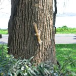 A squirrel climbing up the tree